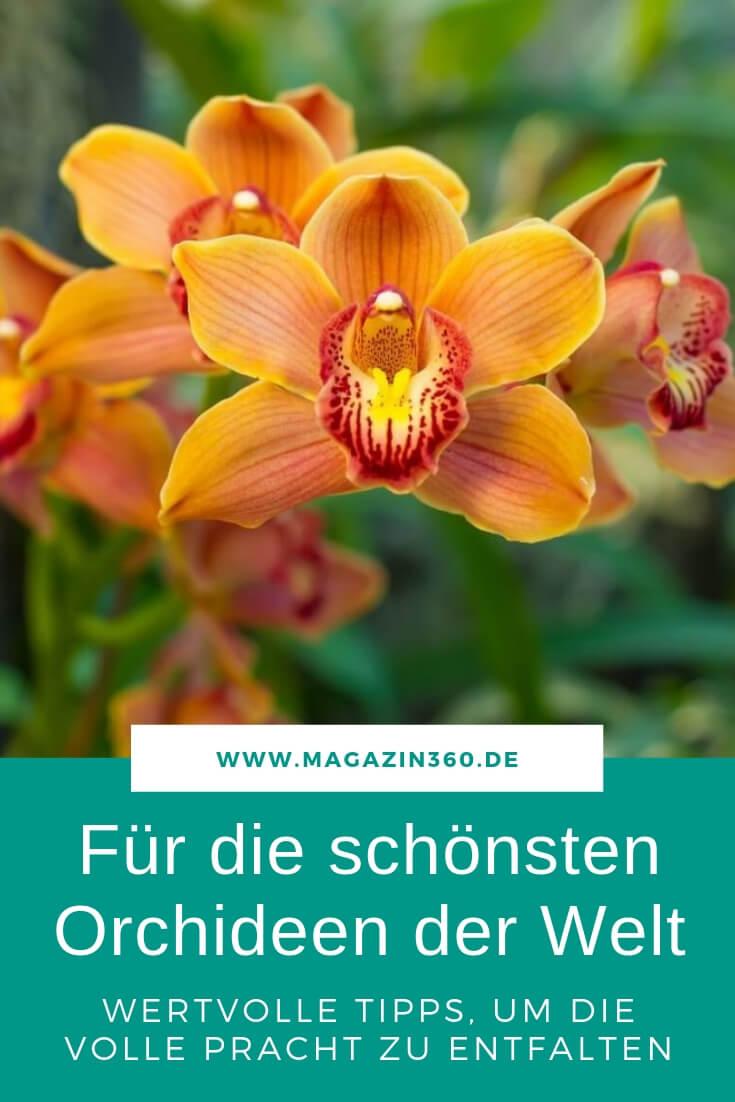 Für die schönsten Orchideen der Welt - Wertvolle Tipps, um die volle Pracht zu entfalten