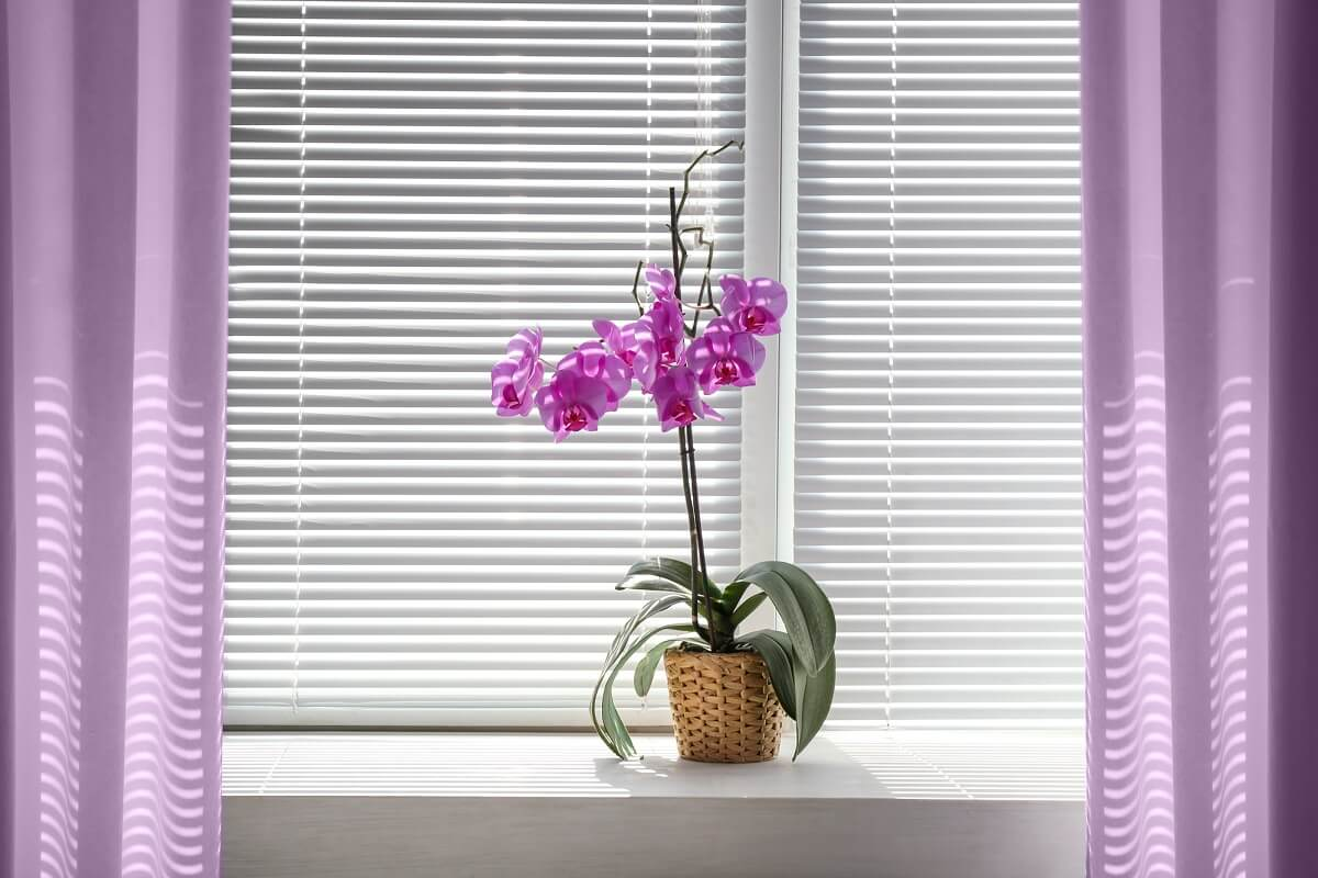 Eine gepflegte Orchidee auf der Fensterbank lockert den Blick aufs das Fenster auf