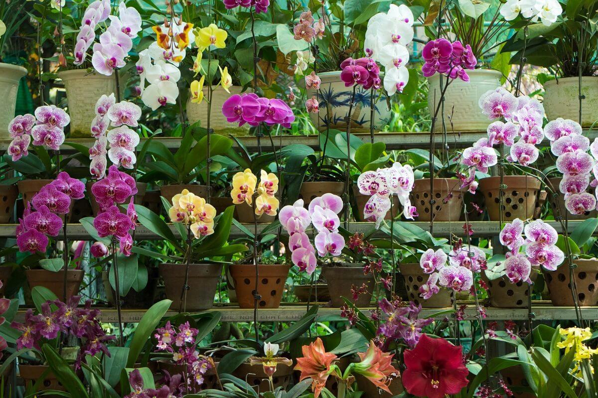 Gepflegte Orchideen sind sowohl im Garten, als auch im Haus ein absoluter Hingucker