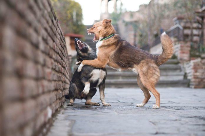 Hundehaftpflichtversicherung – wenn aus Spielen Ernst wird
