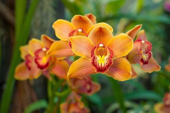 Orchideen pflegen - Mit diesen Tipps erstrahlen Ihre Orchideen im richtigen Glanz