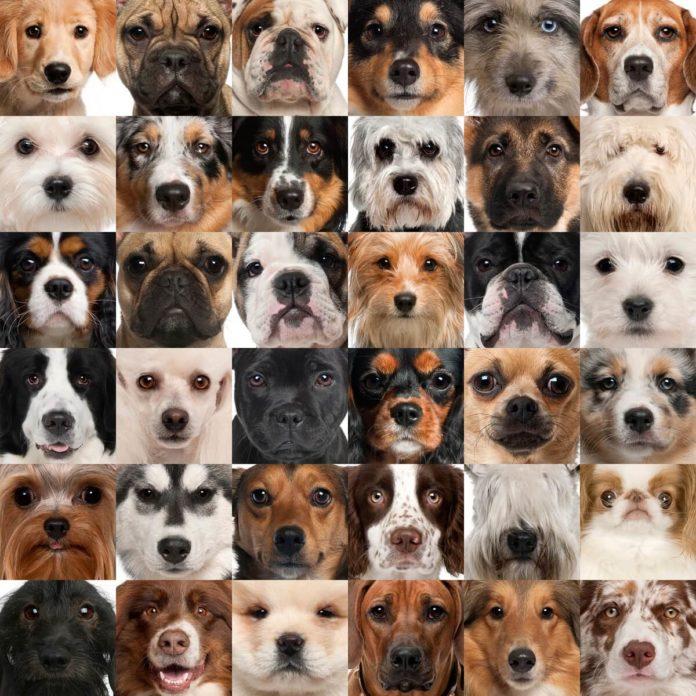 Welcher Hund passt zu mir? Welche Hunderasse passt zu mir? Ein Hund ist schnell angeschafft, aber ist es auch der Richtige?
