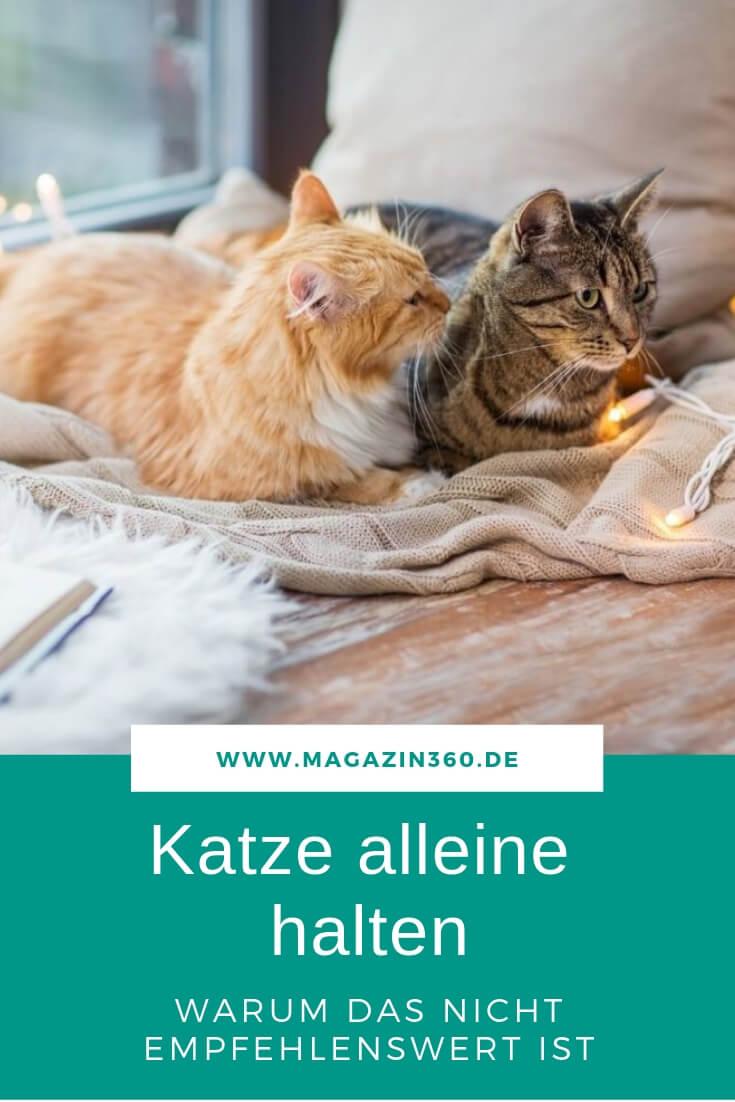 Katze alleine halten - Warum das nicht empfehlenswert ist