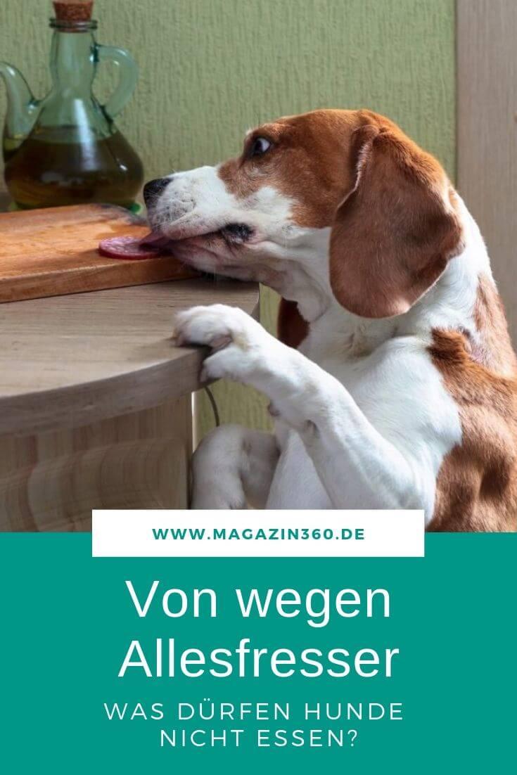 Von wegen Allesfresser - Was dürfen Hunde nicht essen?