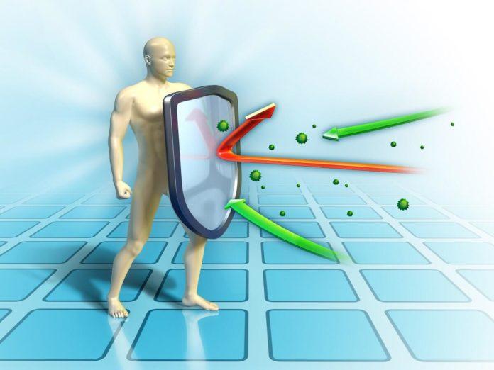 Das Immunsystem sorgt für die Gesundheit des eigenen Körpers - Tipps, wie man das Immunsystem stärken kann