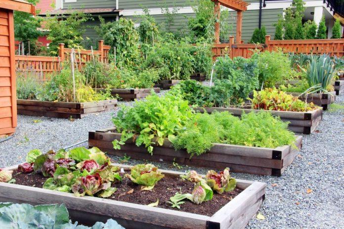 Gemüsebeet anlegen - Passende Ideen für Ihr Gemüsebeet