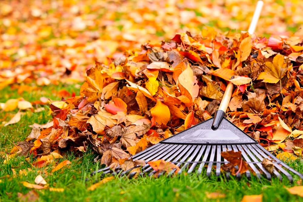 Im Herbst fallen die Blätter von den Bäumen - Aber wieso ist das überhaupt so?