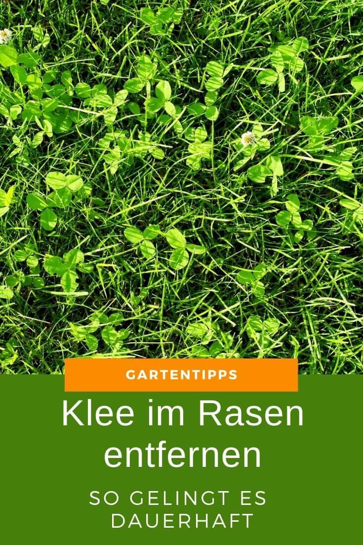Klee im Rasen entfernen - So gelingt es dir - Garten und Gartentipps
