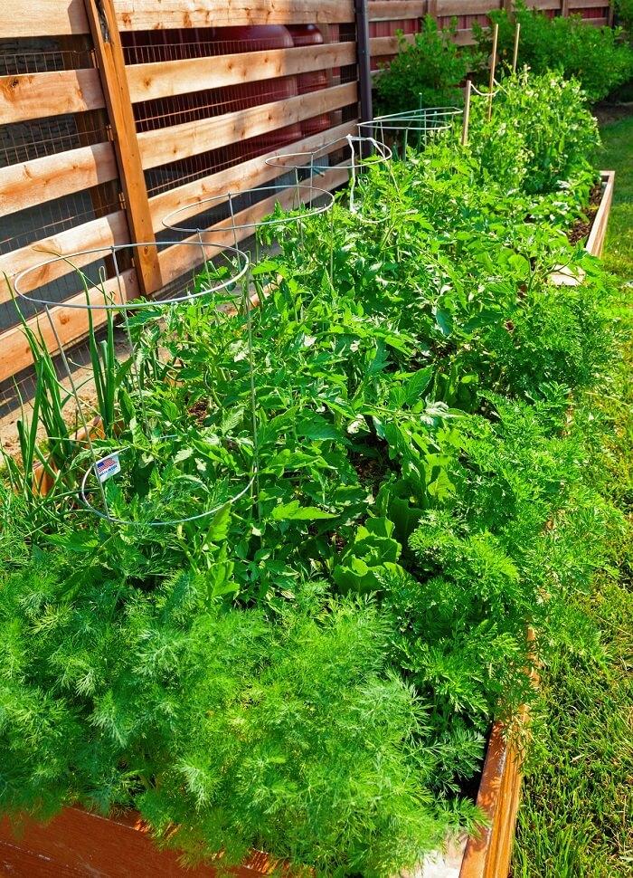 Kleinen Gemüsegarten anlegen - Eine Beeteinfassung aus Holz sorgt auch für ein optisches Highlight