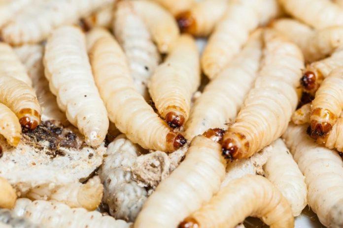 Maden in der Mülltonne – Maden entfernen und vorbeugen