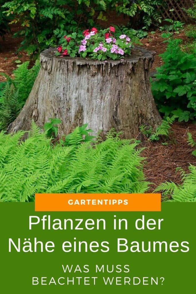 Pflanzen in der Nähe eines Baumes – Was muss beachtet werden