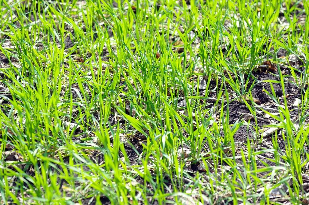 Rasen anlegen - So klappt es mit dem satten Grün