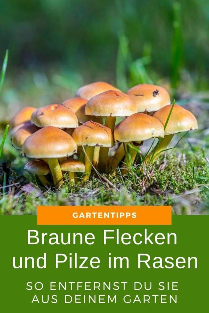 So entfernst Du braune Flecken und Pilze im Rasen aus deinem Garten