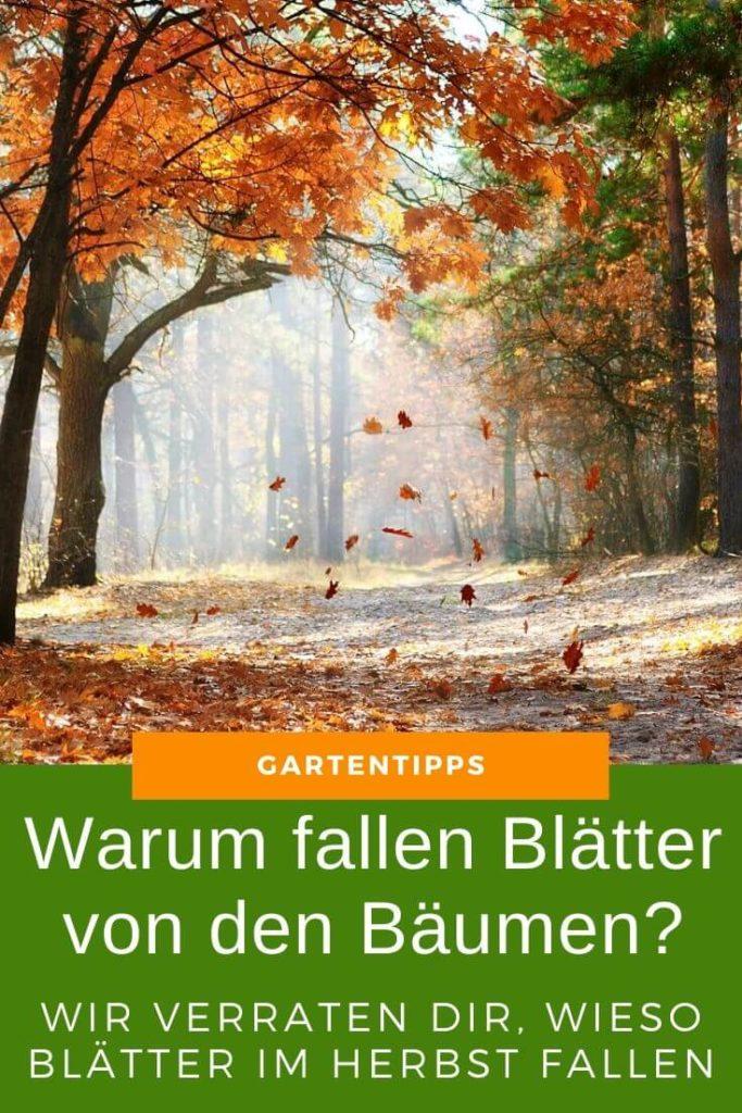 Warum fallen Blätter von den Bäumen - Wir verraten dir, wieso es im Herbst Laub gibt