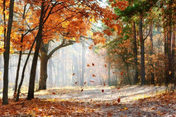 Warum fallen Blätter von den Bäumen - Wir verraten es Ihnen