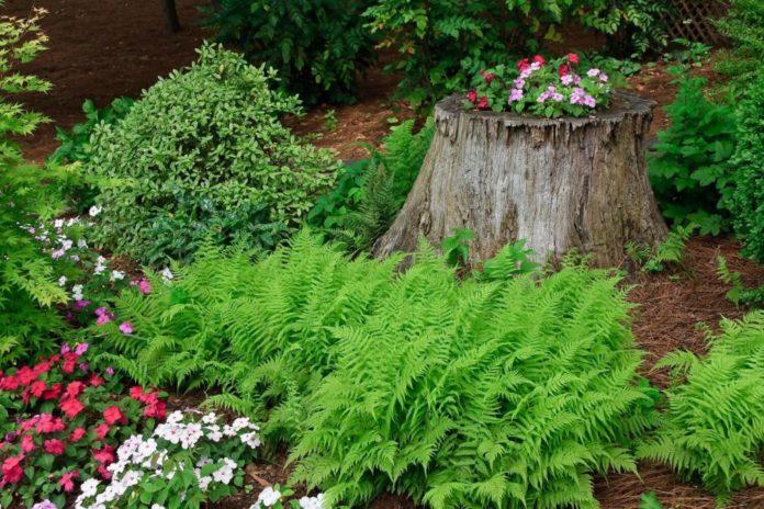 Wenn Sie Pflanzen in der Nähe von einem Baum oder Baumstumpf einsetzen möchten, gilt es einiges zu beachten