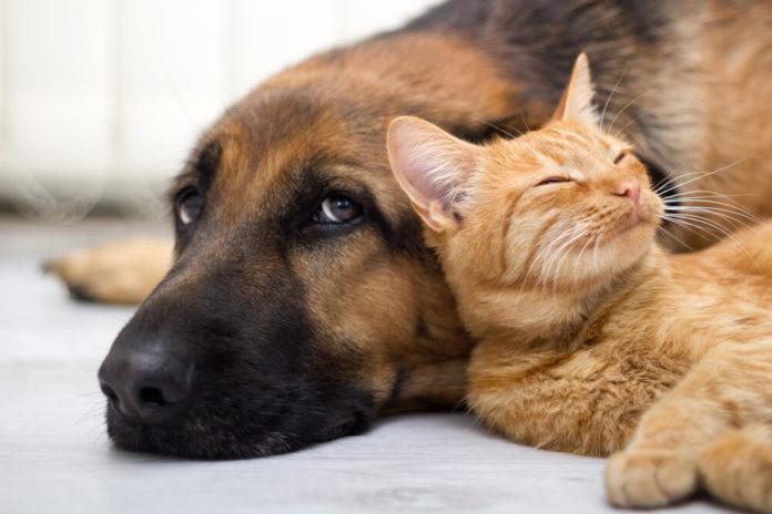 Hunde und Katzen gehören zu den beliebten Haustieren